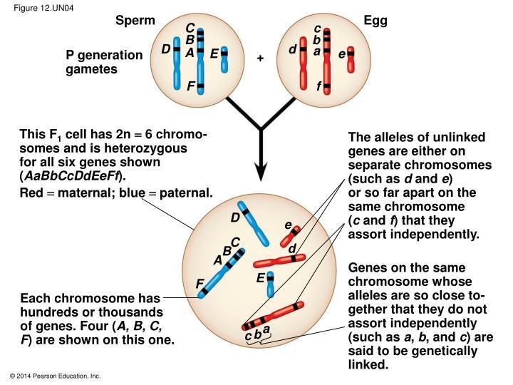 Figure 12.UN04