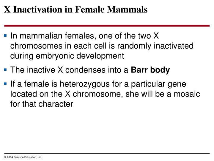 X Inactivation in Female Mammals
