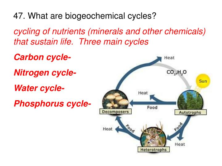 47. What are biogeochemical cycles?