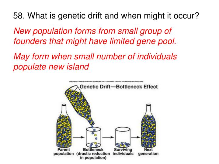 58. What is genetic drift and when might it occur?
