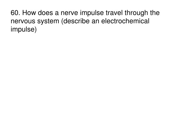 60. How does a nerve impulse travel through the nervous system (describe an electrochemical impulse)