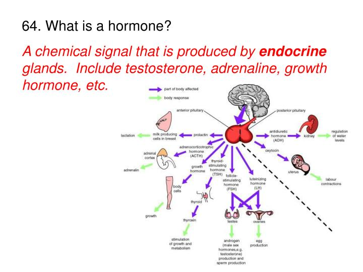64. What is a hormone?