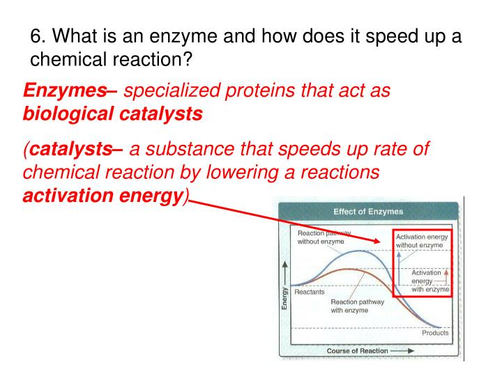6. What is an enzyme and how does it speed up a chemical reaction?