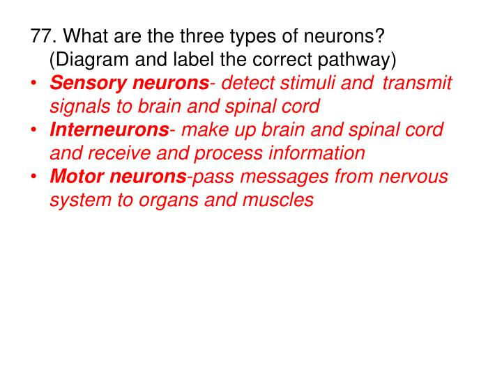 77. What are the three types of neurons?  (Diagram and label the correct pathway)
