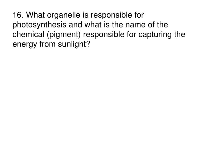 16. What organelle is responsible for photosynthesis and what is the name of the chemical (pigment) responsible for capturing the energy from sunlight?