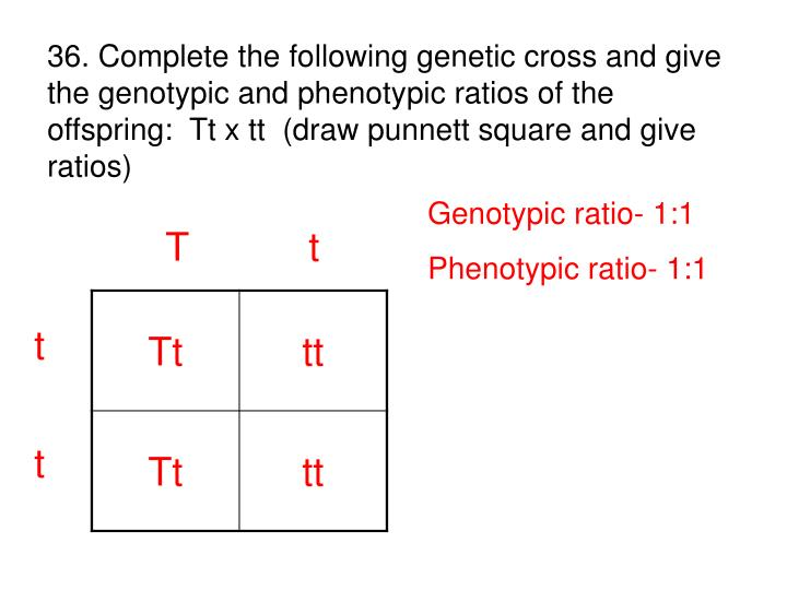 36. Complete the following genetic cross and give the genotypic and phenotypic ratios of the               offspring:  Tt x tt  (draw punnett square and give ratios)