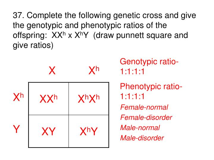 37. Complete the following genetic cross and give the genotypic and phenotypic ratios of the               offspring:  XX
