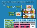 sex linked genes eye color in fruit flies