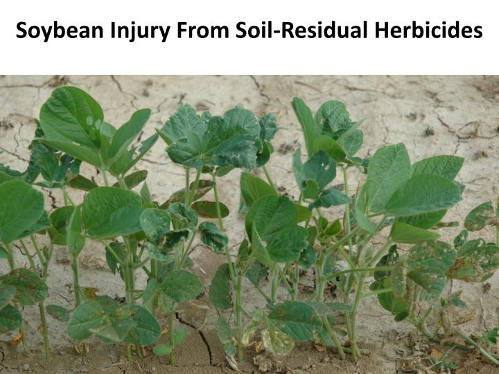 Soybean Injury From Soil-Residual Herbicides