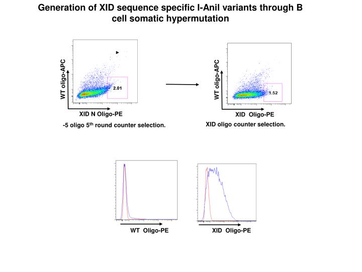 Generation of XID sequence specific I-Anil variants through B cell somatic hypermutation