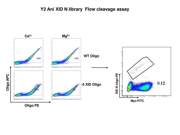 Y2 Ani XID N library  Flow cleavage assay