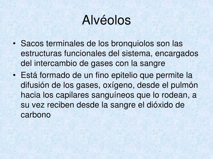 Alvéolos