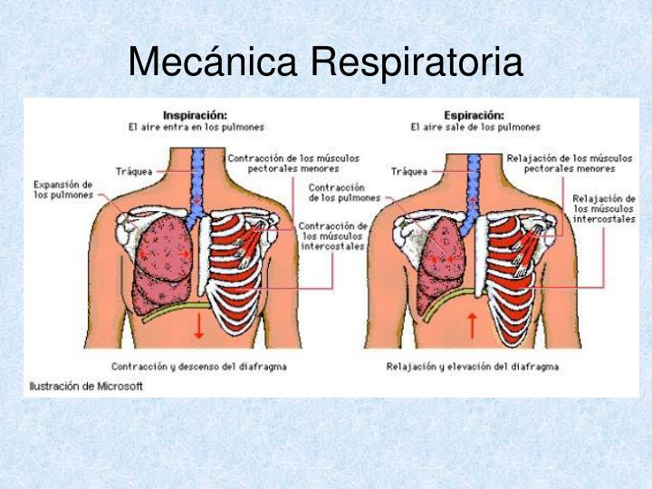 Mecánica Respiratoria