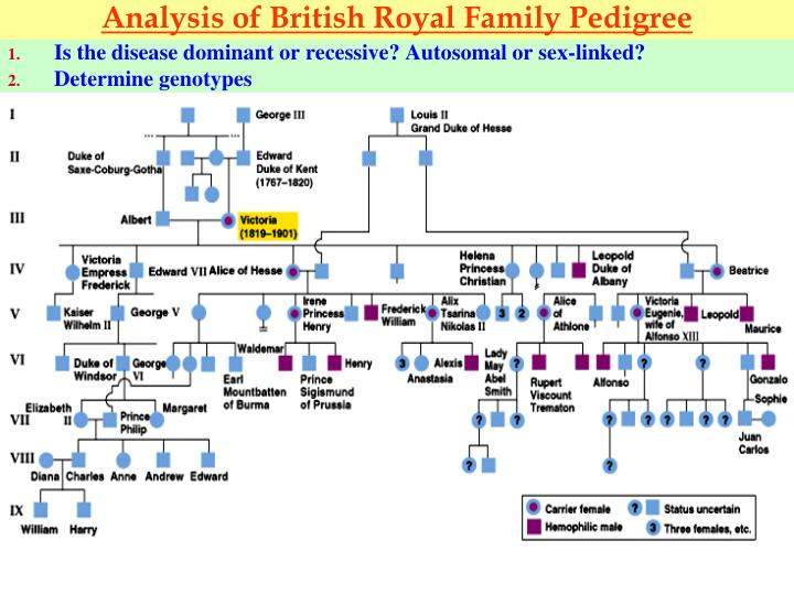 Analysis of British Royal Family Pedigree