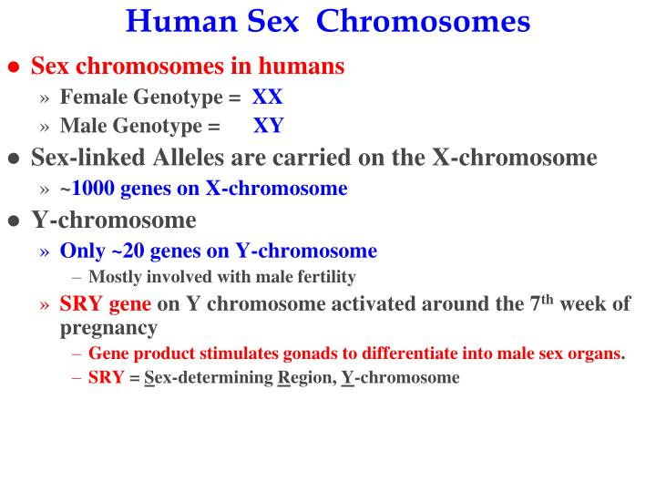 Human Sex  Chromosomes
