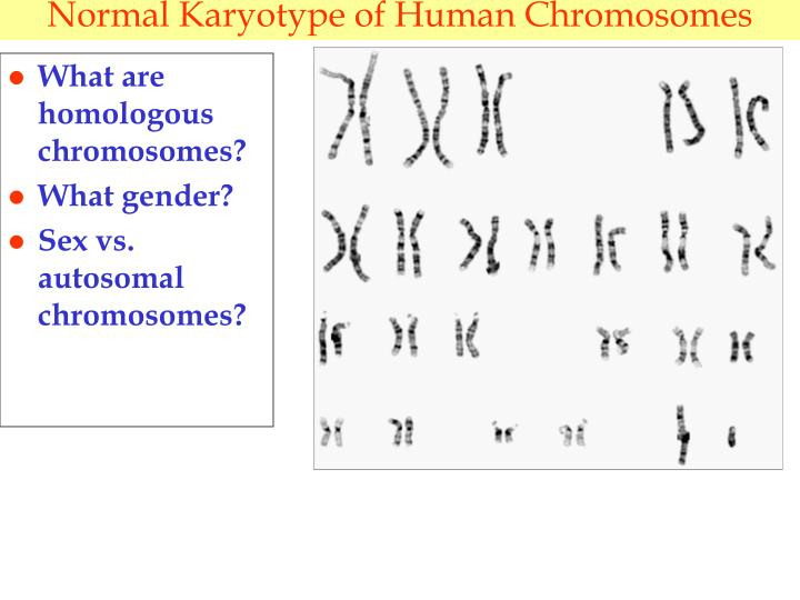 Normal Karyotype of Human Chromosomes