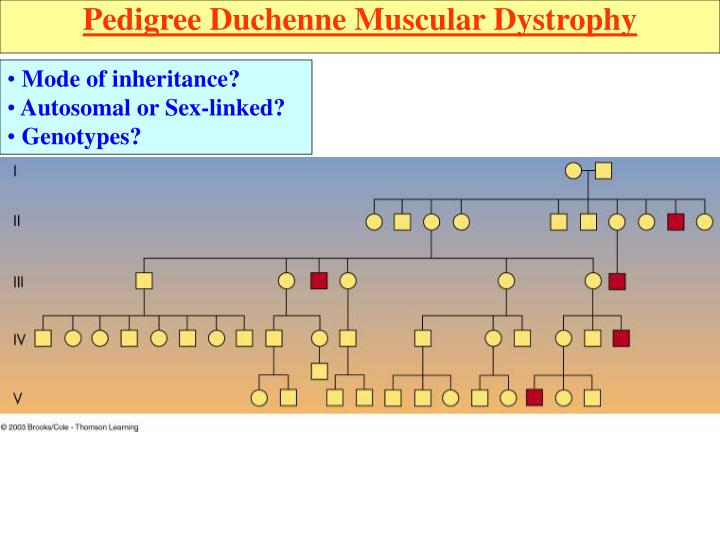 Pedigree Duchenne Muscular Dystrophy