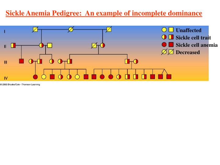 Sickle Anemia Pedigree:  An example of incomplete dominance