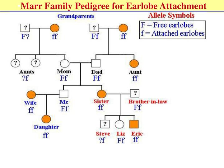 Marr Family Pedigree for Earlobe Attachment