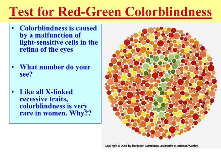 Colorblindness is caused by a malfunction of light-sensitive cells in the retina of the eyes