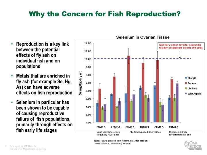 Why the concern for fish reproduction