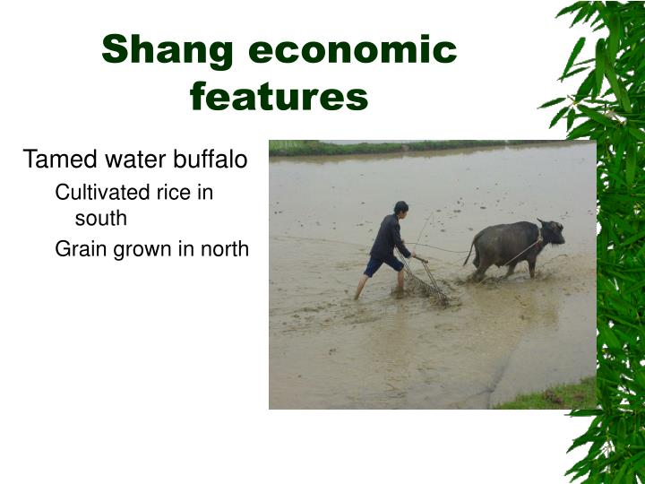 Shang economic features
