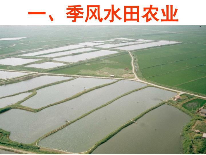一、季风水田农业