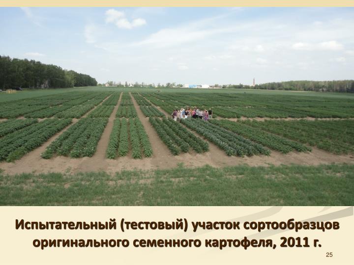 Испытательный (тестовый) участок сортообразцов оригинального семенного картофеля, 2011 г.