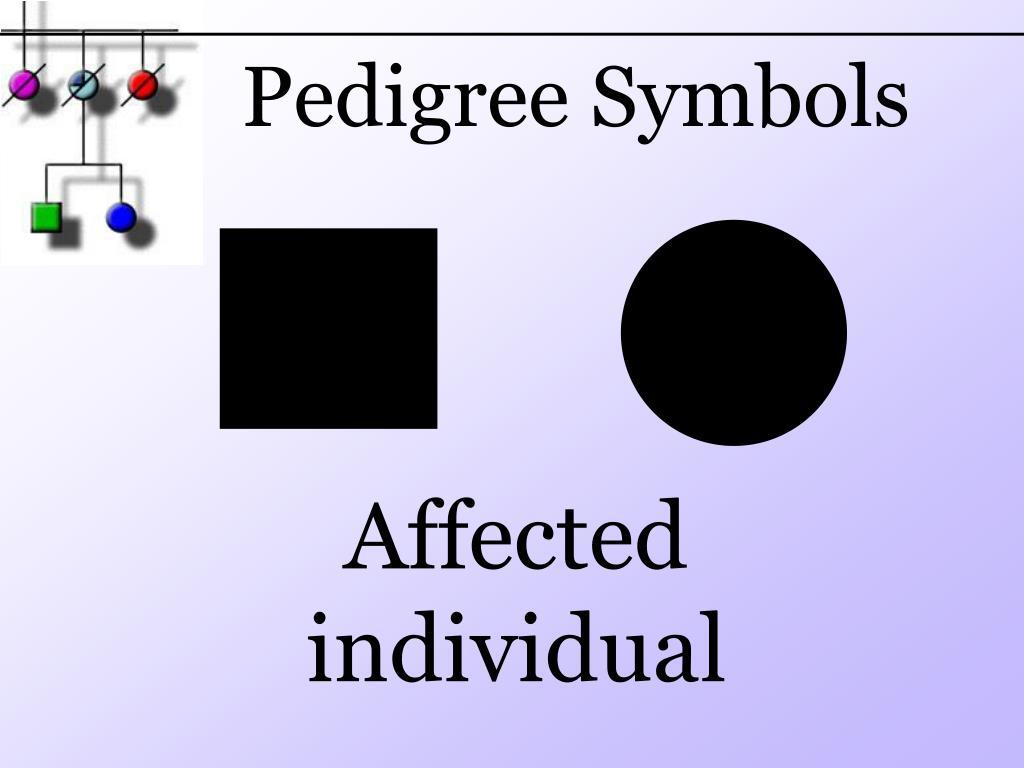 PPT - Pedigree PowerPoint Presentation, free download - ID ...