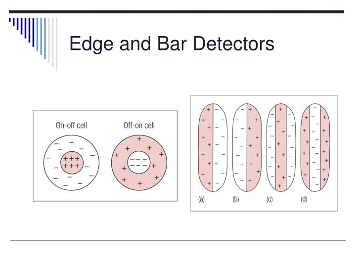 Edge and Bar Detectors