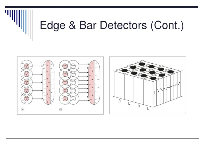 Edge & Bar Detectors (Cont.)