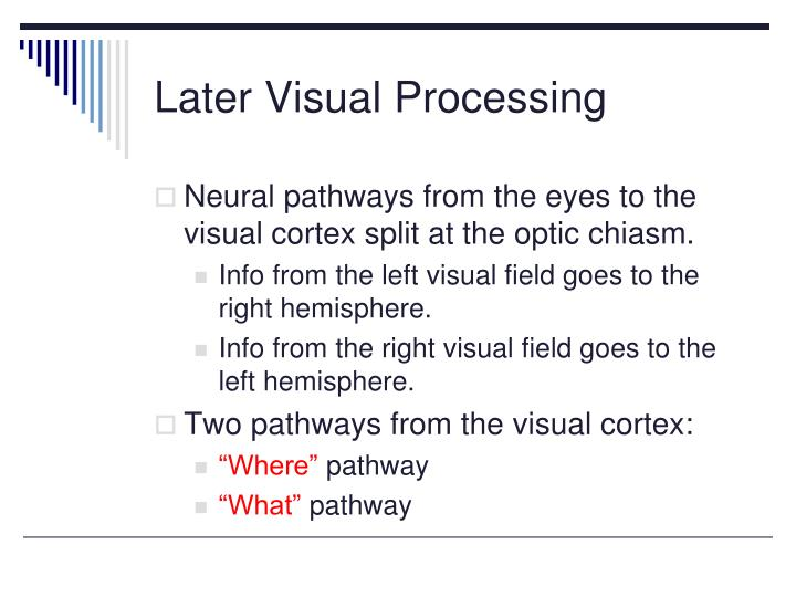 Later Visual Processing