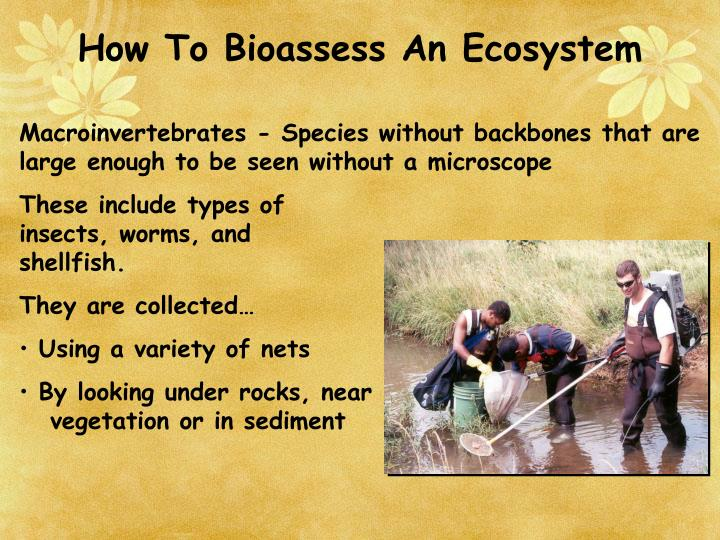 How To Bioassess An Ecosystem