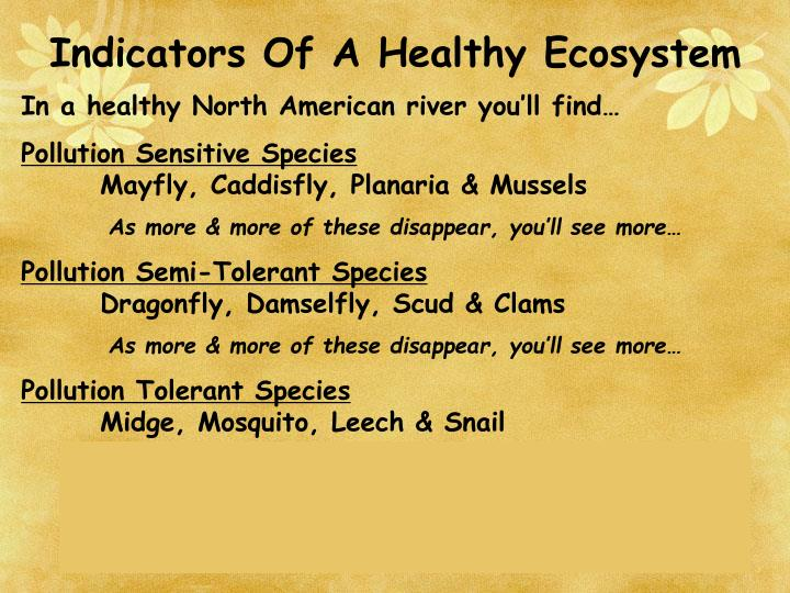 Indicators Of A Healthy Ecosystem