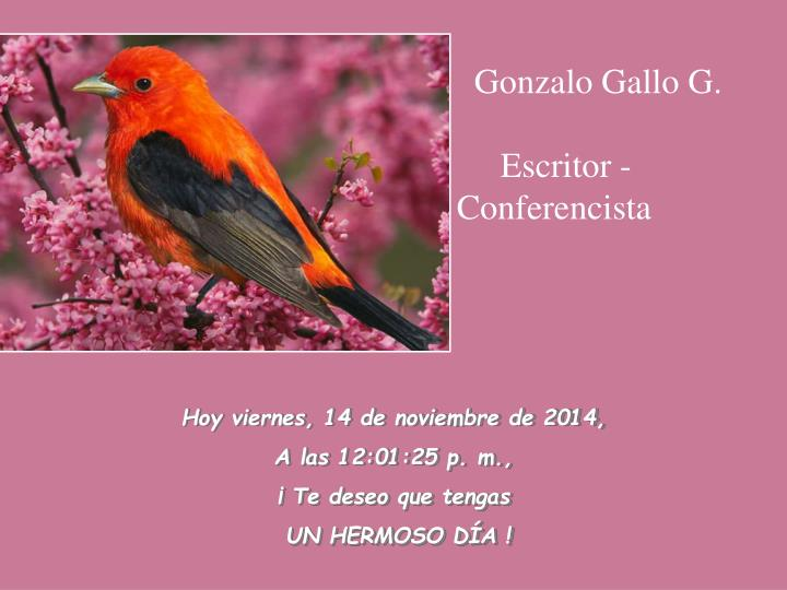 Gonzalo Gallo G.
