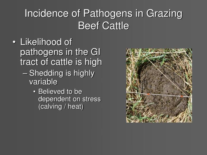 Incidence of Pathogens in Grazing Beef Cattle