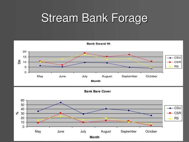 Stream Bank Forage