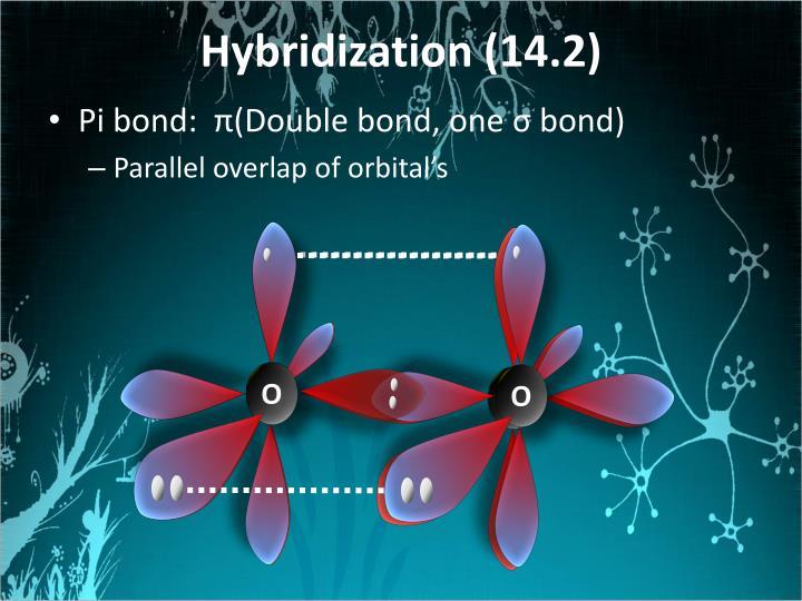 Hybridization (14.2)