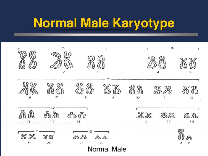 Normal Male Karyotype