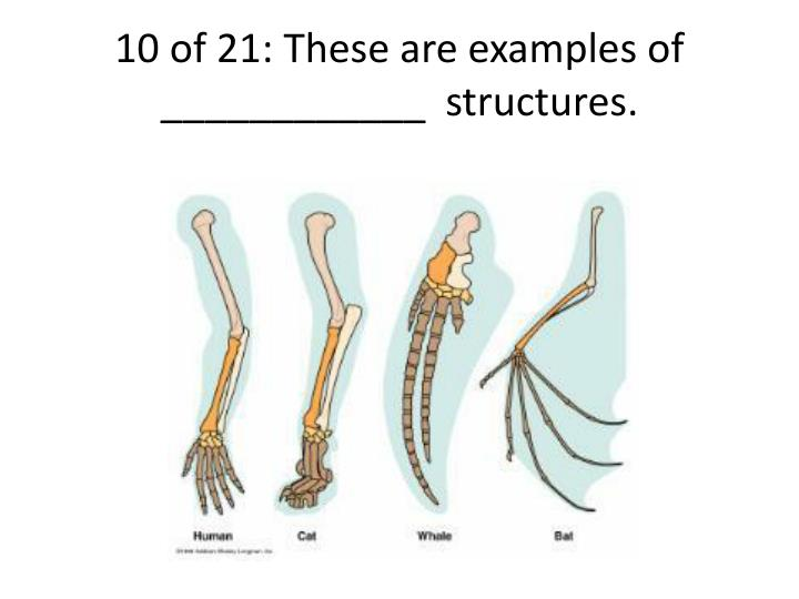 10 of 21: These are examples of ____________  structures.