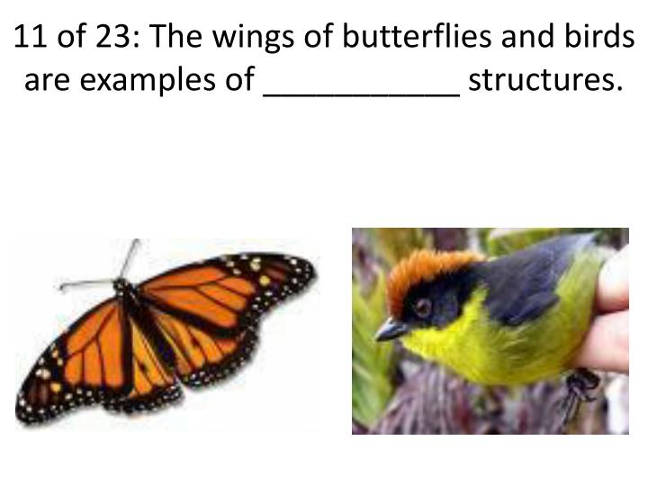 11 of 23: The wings of butterflies and birds are examples of ___________ structures.