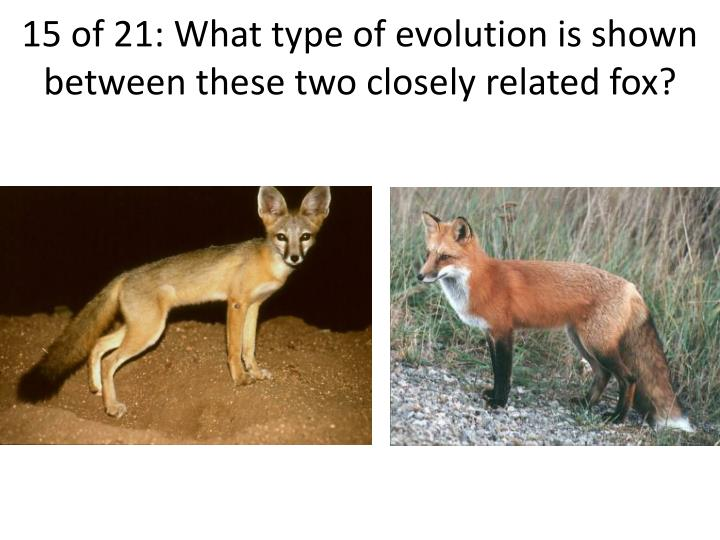 15 of 21: What type of evolution is shown between these two closely related fox?