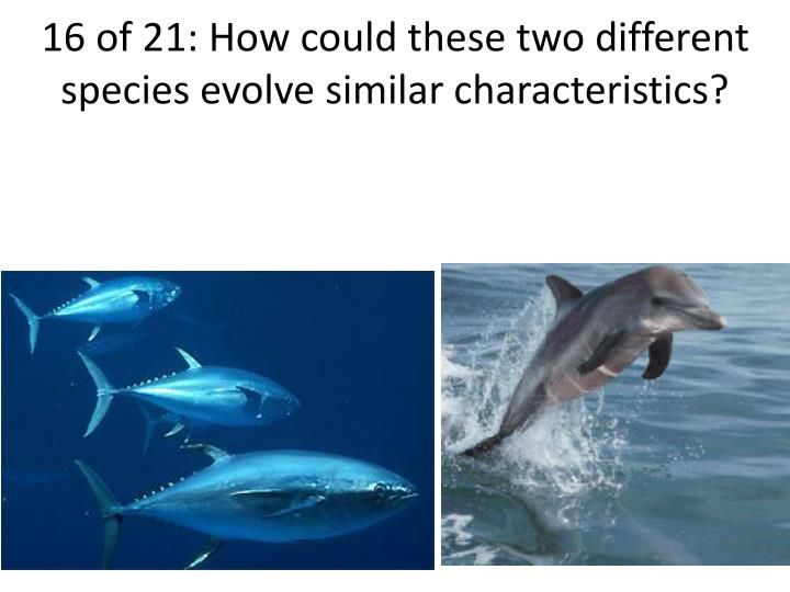 16 of 21: How could these two different species evolve similar characteristics?