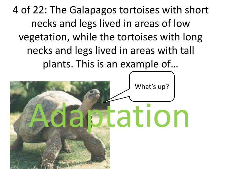 4 of 22: The Galapagos tortoises with short necks and legs lived in areas of low vegetation, while the tortoises with long necks and legs lived in areas with tall plants. This is an example of…