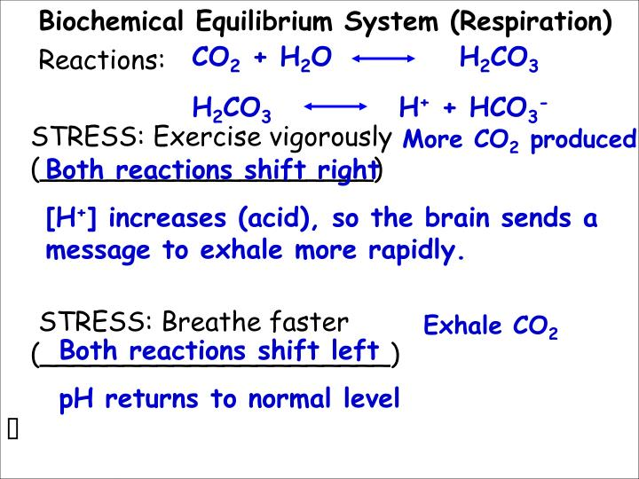Biochemical Equilibrium System (Respiration)