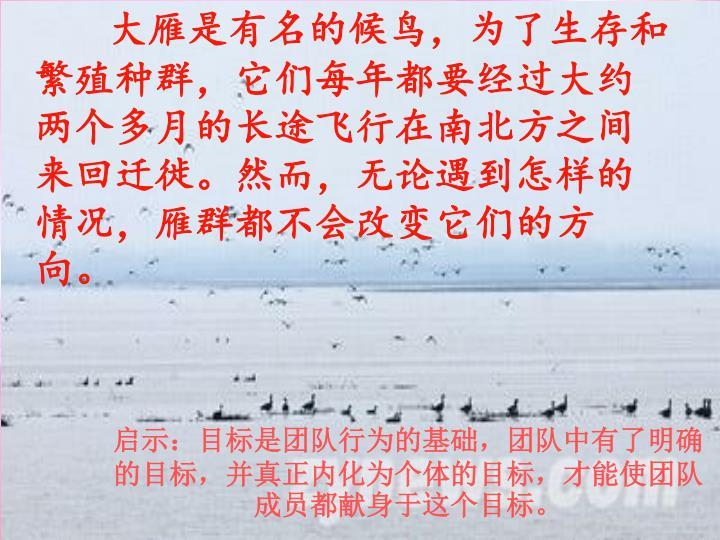 大雁是有名的候鸟,为了生存和繁殖种群,它们每年都要经过大约两个多月的长途飞行在南北方之间来回迁徙。然而,无论遇到怎样的情况,雁群都不会改变它们的方向。