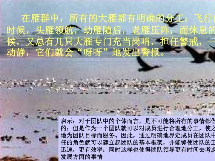 在雁群中,所有的大雁都有明确的分工:飞行的时候,头雁领航,幼雁随后,老雁压阵;而休息的时候,又总有几只大雁专门充当岗哨,担任警戒,一有动静,它们就会