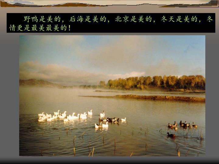 野鸭是美的,后海是美的,北京是美的,冬天是美的,冬情更是最美最美的!