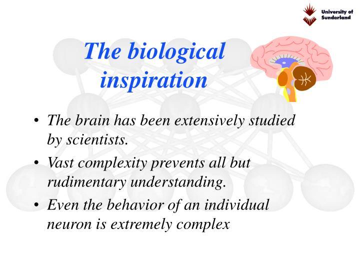 The biological inspiration