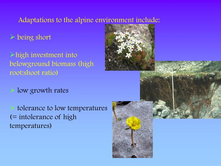 Adaptations to the alpine environment include: